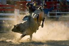 bigstock-Rodeo-Bull-Rider-1056391 (2)
